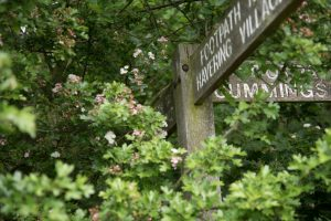 Signpost lost in trees